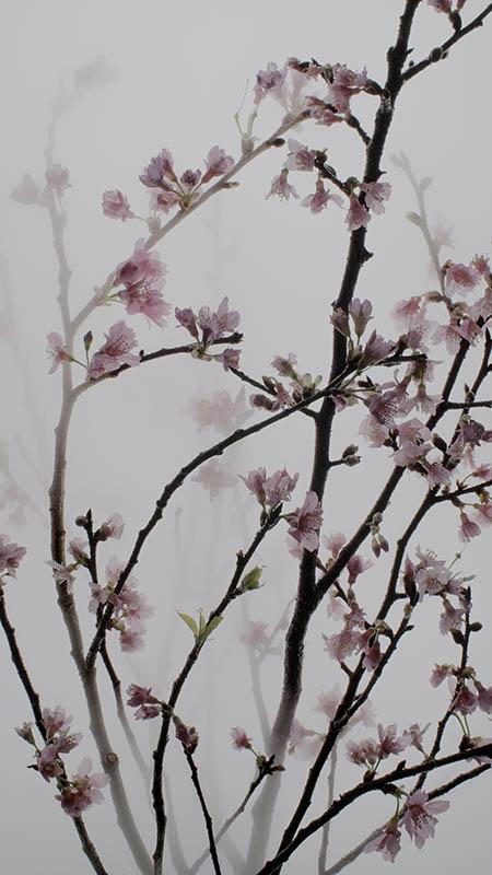 Still Life 005 Cherry, Wu Chi-Tsung