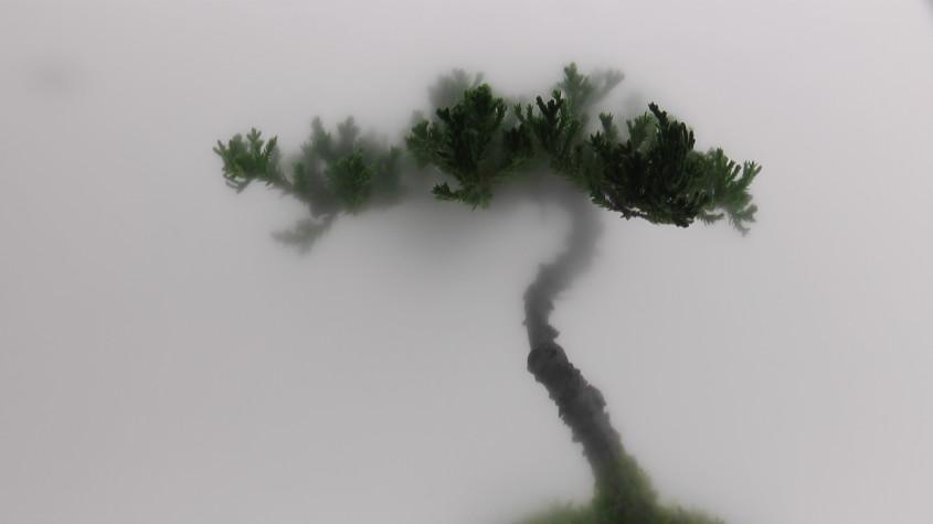 001 pine