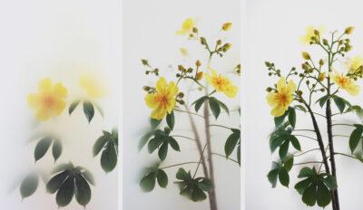 Still Life 012 – Buttercup Tree