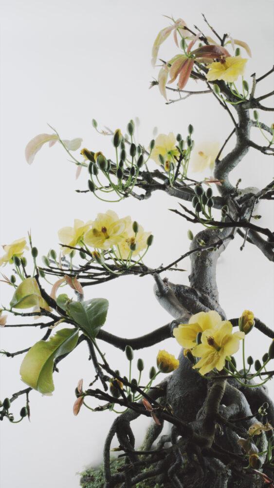 Still-Life-014-Yello-Mai-flower